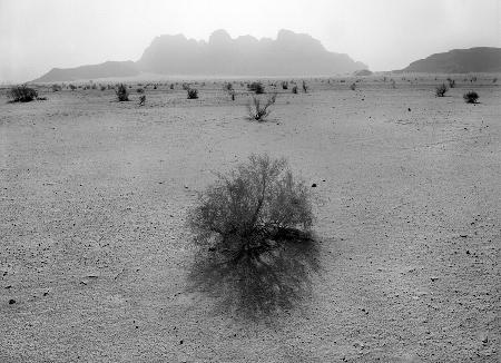 Jordan-bush to Wadi Rum