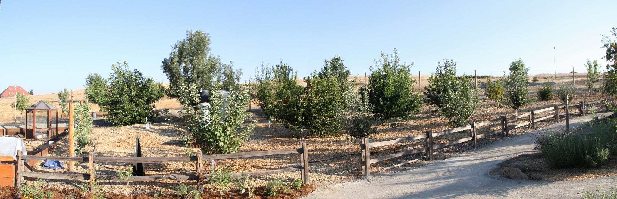 Orchard Panorama