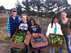 Julia (left) gleaning at a Point Reyes farm with Marin Organic's Glean Team