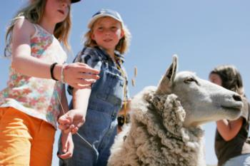 kids and sheep