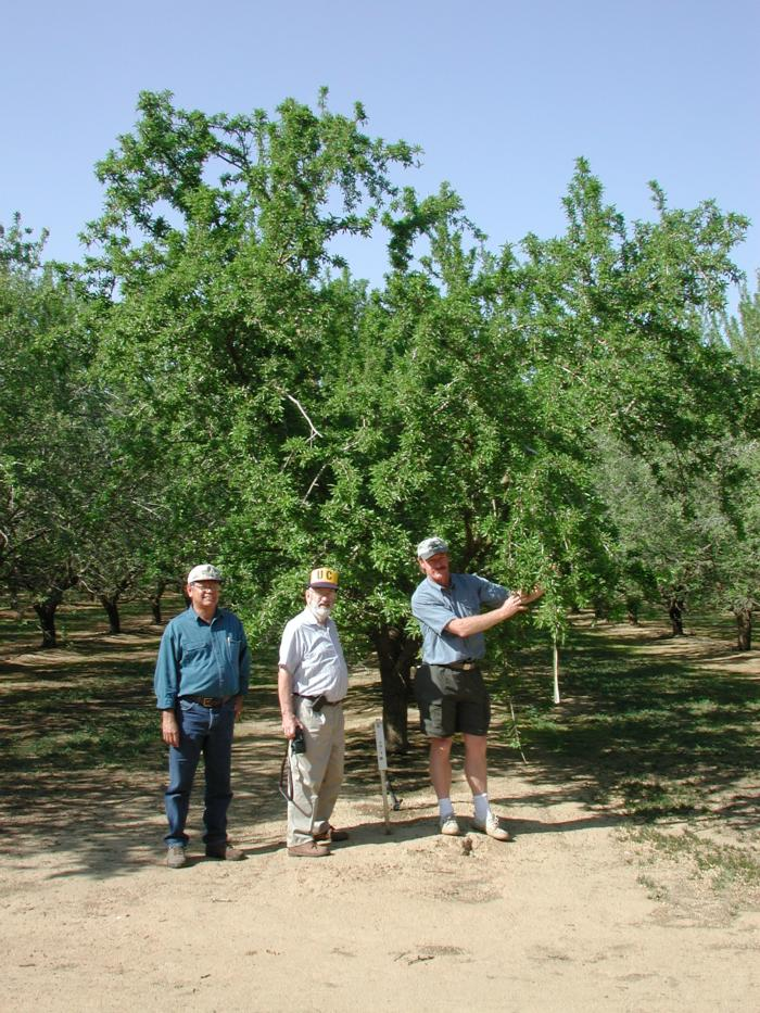 Mario Viveros Dale Kester and Tom Gradziel at Kern Regional Almond Variety Trial March 28 2002