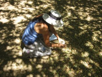 Collecting almond samples
