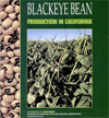 Black Bean Production in California cover thumbnail