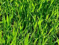grass-resized