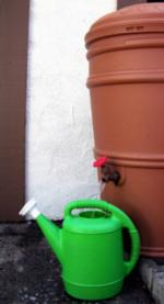 Rain barrels allow gardeners to capture water and use it during dry months. Photo: UC Regents