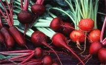 Growing in Your Garden Now - Beets anyone?