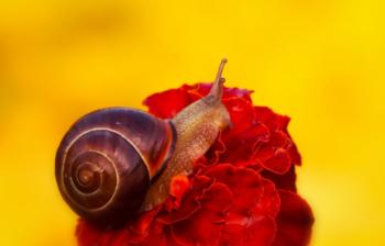 Snails are common garden pests that, left unchecked, can cause significant damage. Photo: Krzysztof Niewolny