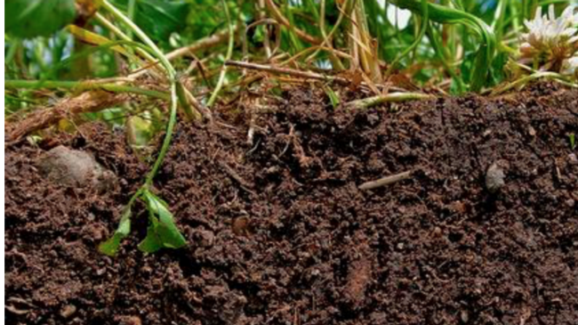 soil in ground