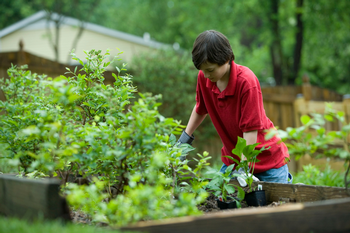 Middle and high school students find educational benefits from gardening. Photo: unsplash, CDC