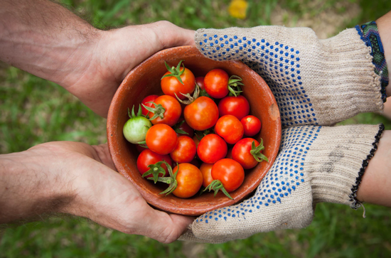 Share your bumper crop with others in the community. Photo: Elaine Casap, Unsplash