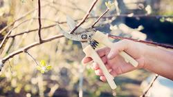 pruning-fruit-trees-PGF6TED