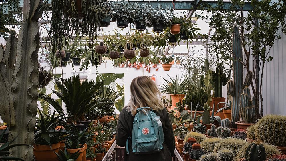 We can grow thousands of different plants in our mild climate, which can make a visit to the nursery overwhelming. Photo, Leone Christine, Unsplash