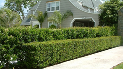 Hedges provide structure and privacy. Photo: GardenSoft