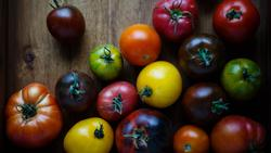 VEG tomato vince-lee-gwT4rs_xlUA-unsplash