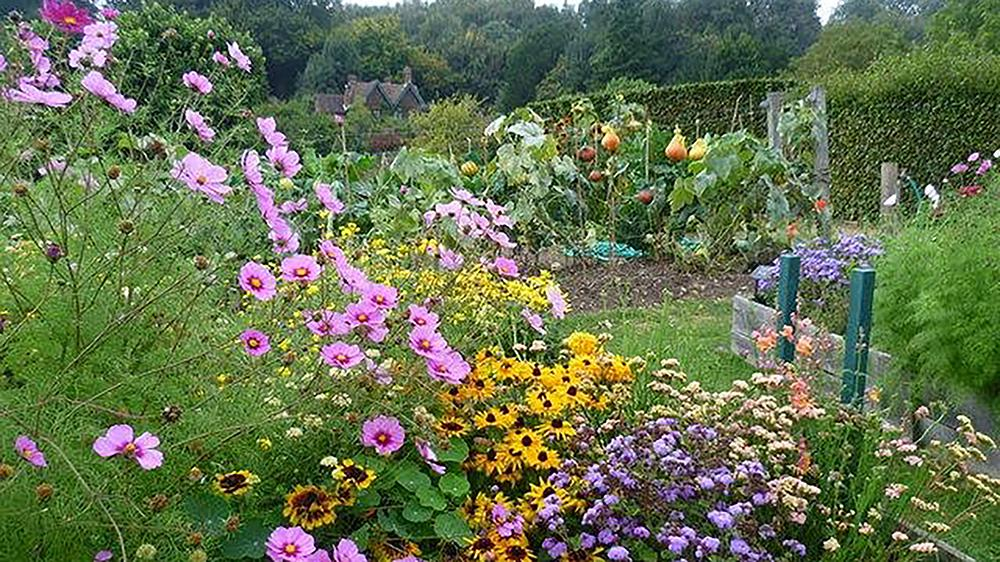 Mix flowering plants into your vegetable garden to invite pollinators and other beneficial insects. Creative Commons