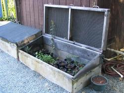 A cold frame provides protected space for spring seedlings. Sandy Metzger