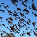 Invite a Bat to Your Garden and Ditch that Mosquito Spray!