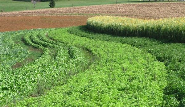 cover-crop-main_SARE-Outreach-600x347