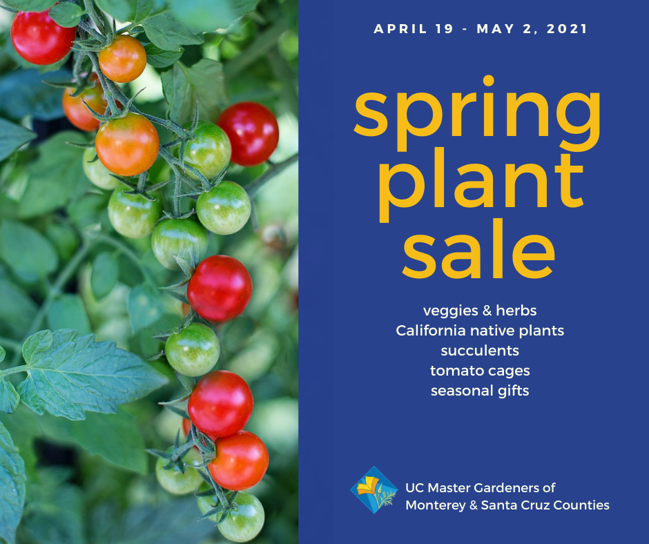2021 spring plant sale - tomatoes
