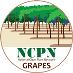 NCPN_Grapes_png