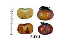 persimmons_fuyu_quality