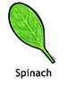 spinach_english250x350