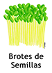 seedsprouts_spanish250x350
