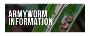 Button_Armyworm Monitoring