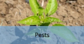 InsectPests_Final