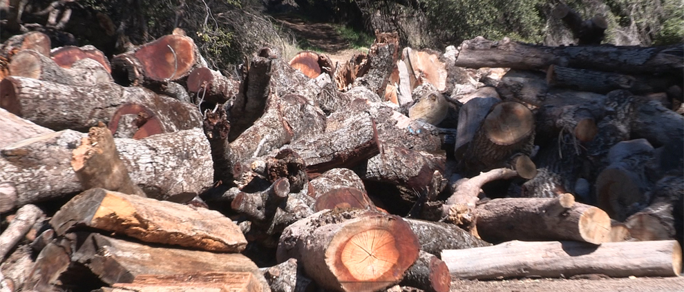 So CAL Green Waste-Wood Biomass Management Symposium
