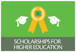 Scholarships for Higher Education button