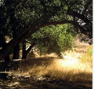 A Contribution to the Redlands Live Oak Canyon