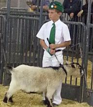 Herald 4-H Pygmy Goat Project Member