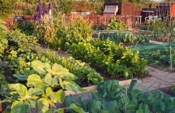 the california garden web is the university of california cooperative extensions web site for home gardening and landscape information - California Garden