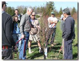 Ted DeJong and participants of the 2013 'Principles' class at a pruning workshop. UC Davis Pomology Teaching Orchard.
