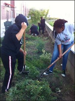 Pittsburg High students digging out the weeds.
