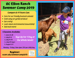 Registration Open for Elkus Ranch Summer Camp!