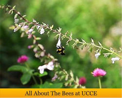 ucce-bees-banner