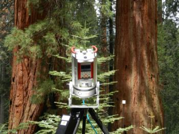 11/4 - Using LiDAR to Measure the Structure of Tall Trees at Whitaker's Forest - Dr. Martin Béland