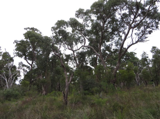 5/31 – near Perth, AU - The native forests in Perth get over a meter in rain, but vegetation is modest, due in part to the old, nutrient-poor soil.