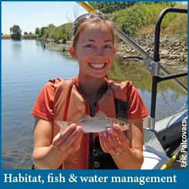 Habitat restoration impacts on salmon and water management