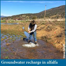 Agricultural groundwater banking in alfalfa