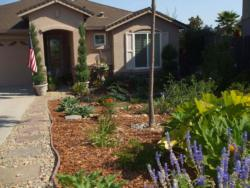 Replacing lawn with drought tolerant plants.