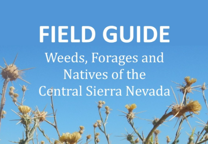 Field Guide: Weeds, Forages and Natives of the Central Sierra Nevada eBook
