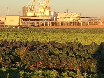 Picture of field and feedlot at DREC