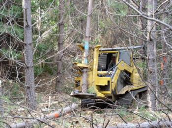 A feller buncher is being used to thin out an overcrowded forest.