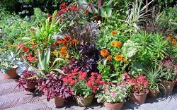 container gardening - cupertino