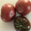 Tomato-Carbon-MG-Emily-Maslyn
