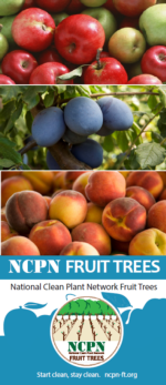 NCPN-Fruit Trees Brochure Thumb