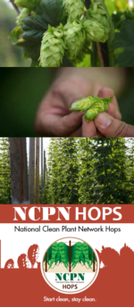 NCPN-Hops Brochure Thumb